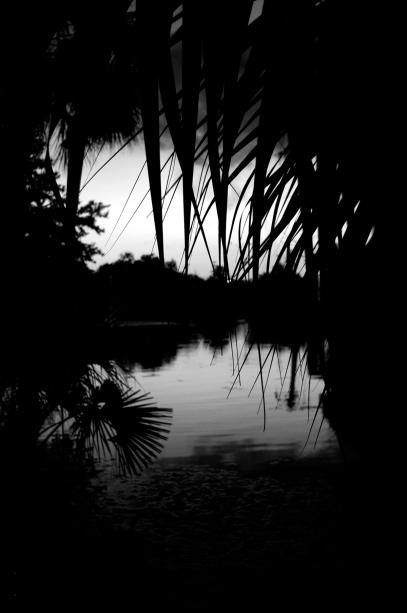 palms 5x7 bw